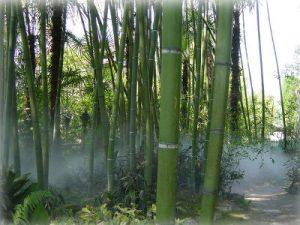 Landschaftsgestaltung: Showeffekte mit Luftbefeuchtung