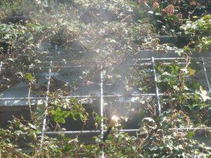 Wandbegrünung: Bewässerung durch Vernebelung