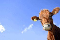 Luftkühlung in Tierzuchten im Sommer