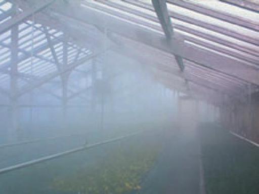 Adiabatische Befeuchtung einer Pilzfarm