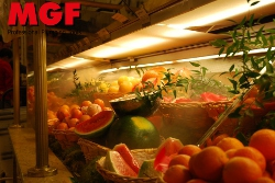 Humidification of fruits, meat, fish. Stop dehydration with MGF System