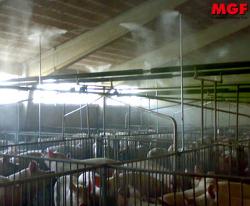 Refroidissement des porcs: brumisation MGF disinfection et bien-être