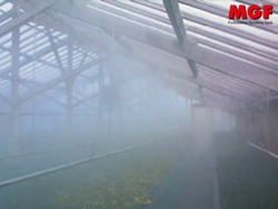 Humidité de la serre: améliorer les cultures avec les humidificateurs